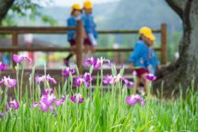 愛知県豊橋市賀茂しょうぶ園のショウブと子ど