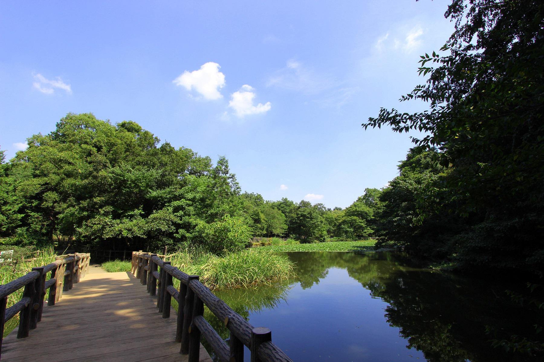 石神井公園_予防歯科