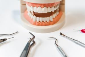 toothmodel