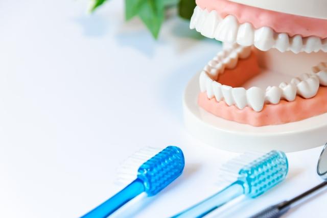 日曜に通院したい方へ!松山市の歯医者さん3院、おすすめポイント紹介